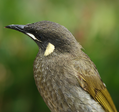 Birdwatching 101