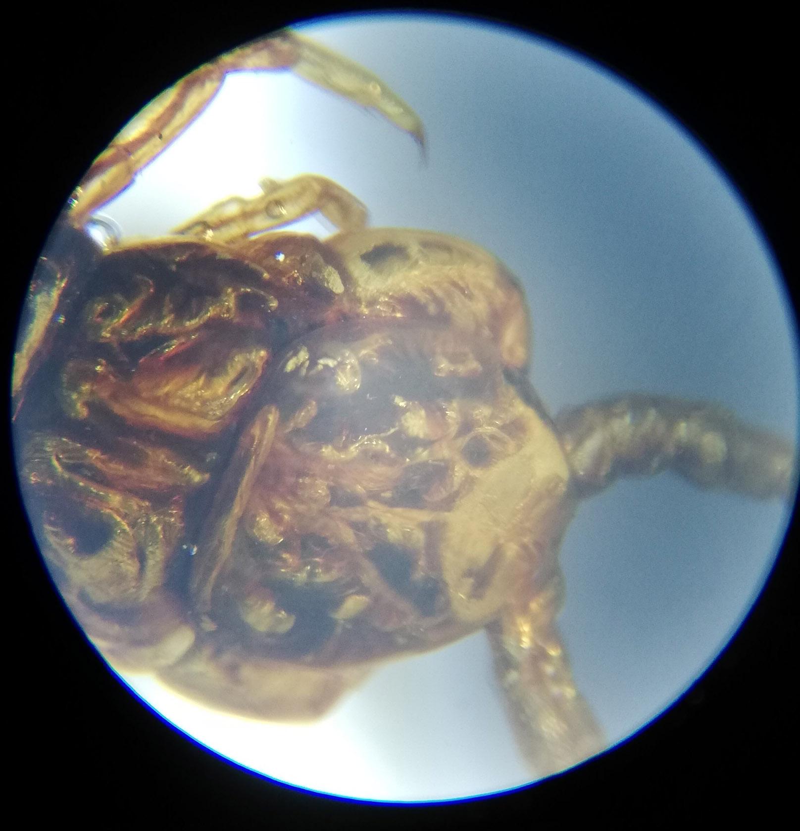 Scorpion Head