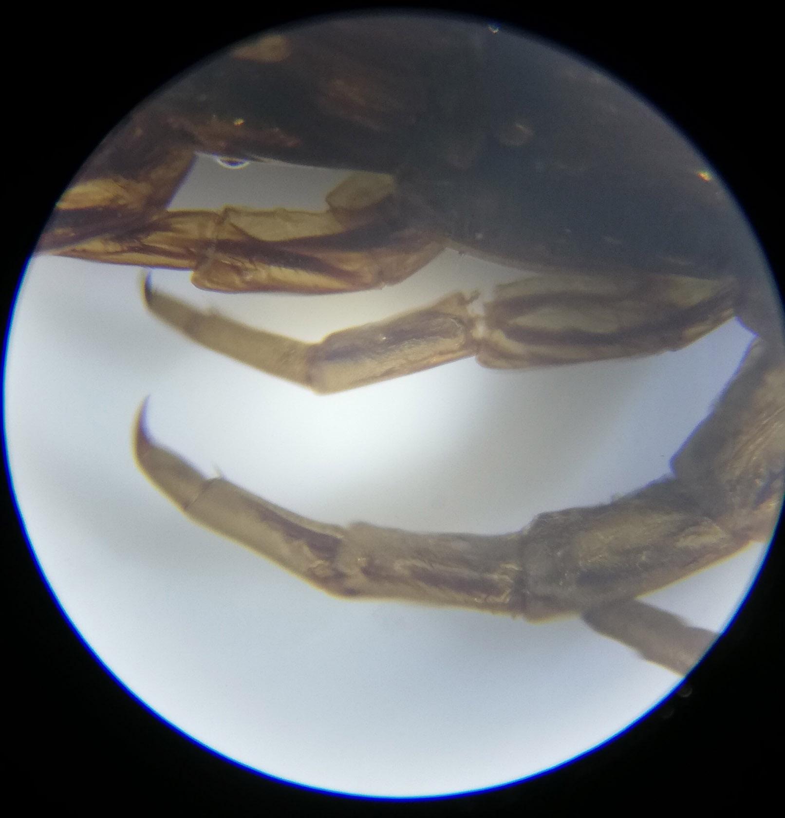 Centipede Legs