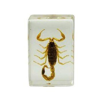 saxon Resin Preserved Insect - Scorpion Specimen - SKU# 310211