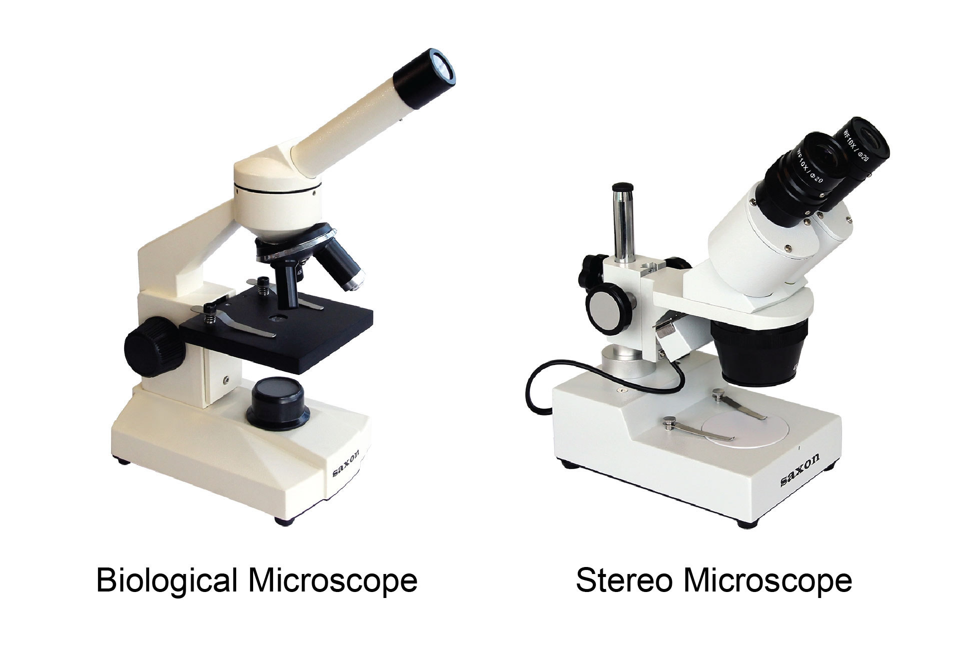 Biological or stereo