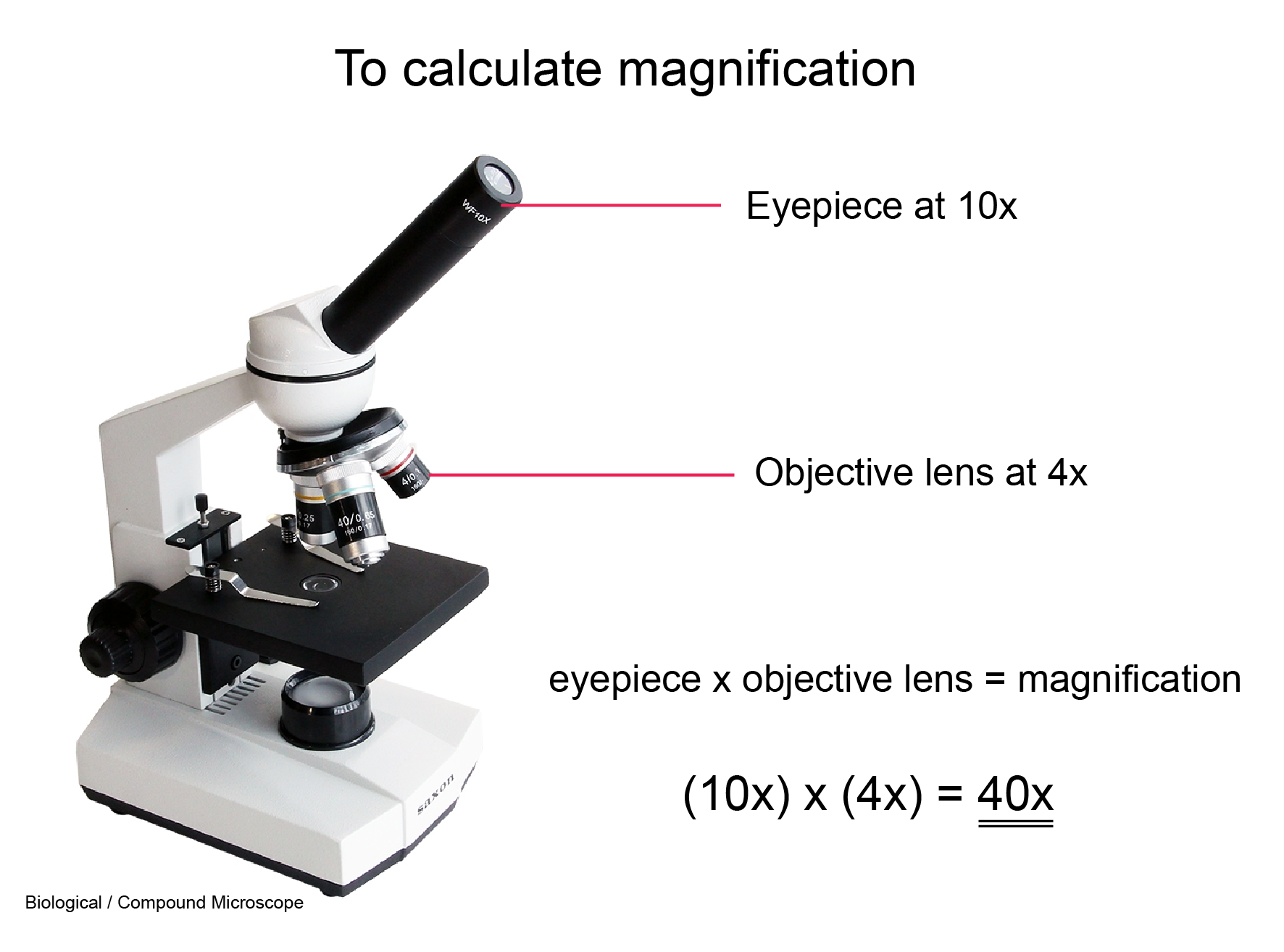 Microscope How to Calculate magnification 01